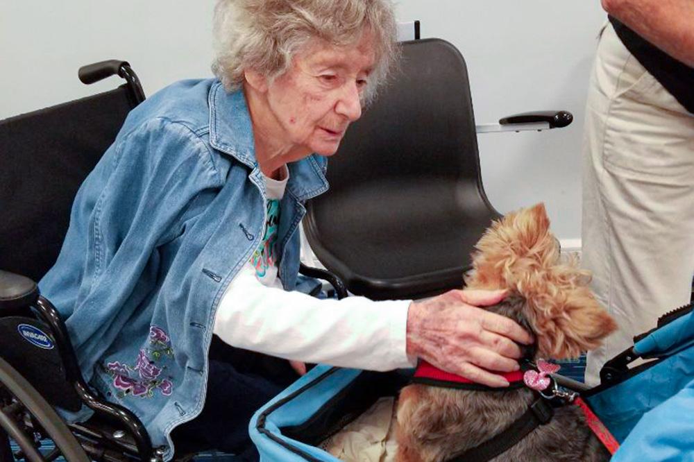 Woman Petting a Dog
